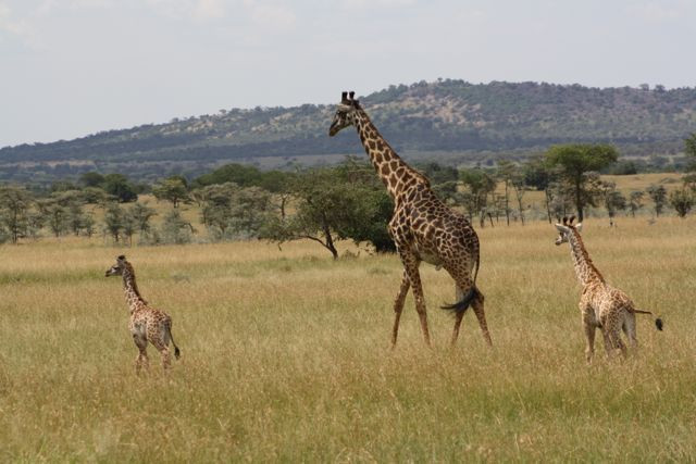 Serengeti National Park (Photo Credit: D. Miller)