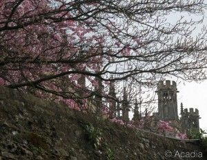 Spring at Oxford by Acadia